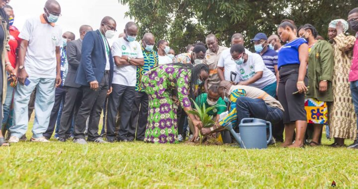 Green Ghana Day: KNUST plants 2k trees on campus, whales park